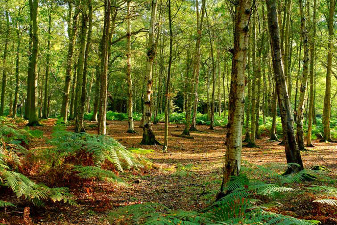 Half of the film will be shot in Epping Forest